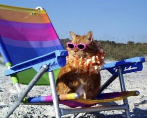 cat-on-beach1