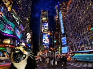 willow-in-times-square