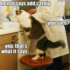 Cat-Baking